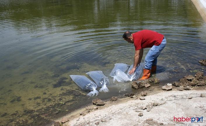 Tarım Bakanı Pakdemirli Açıkladı! Göl ve Göletlere 5 Milyon Balık Bırakılacak
