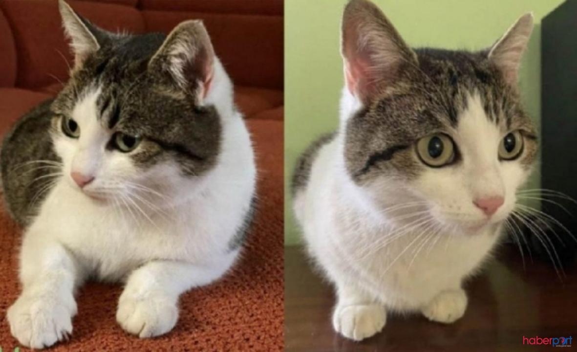Şifacı olduğunu öne sürdüğü kedisini 320 bin dolara satışa çıkardı