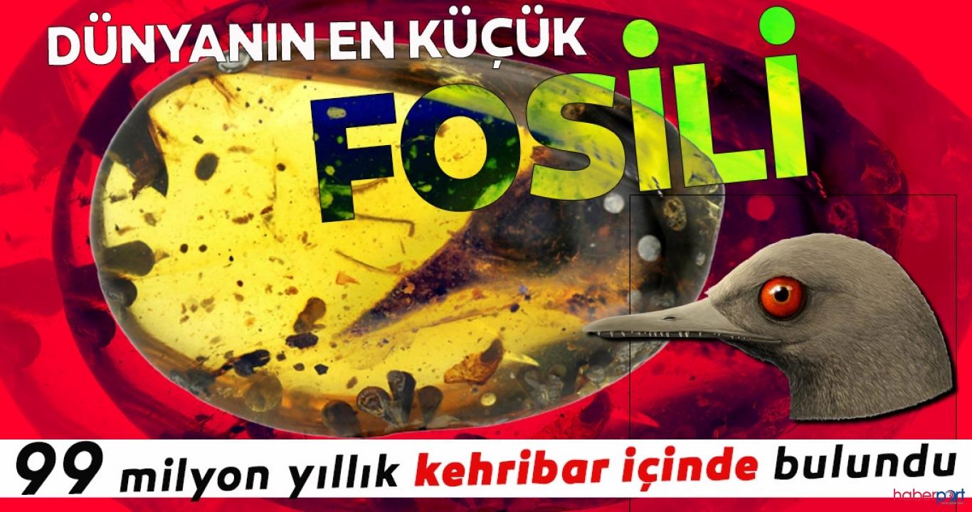 99 milyon yıllık fosil