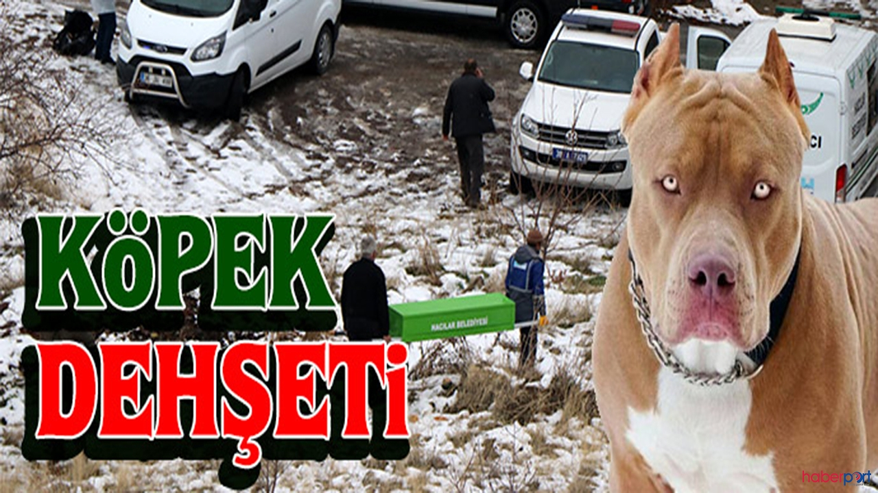Kırşehir'de köpek dehşeti! 4 yaşındaki çocuk hayatını kaybetti