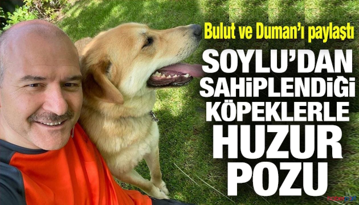 Bakan Soylu, sahiplendiği sokak köpeklerini paylaştı, sosyal medya yıkıldı