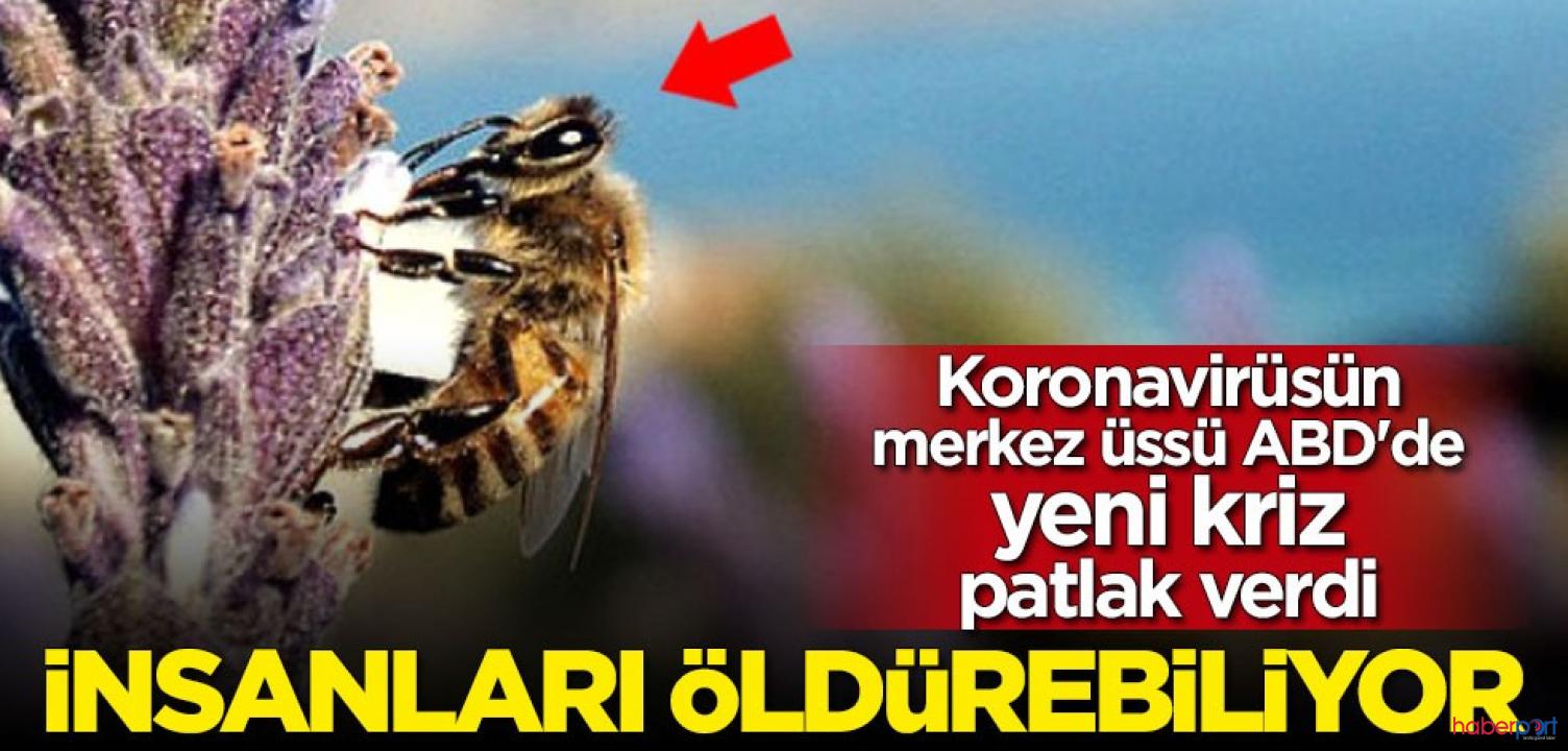Koronavirüsün merkezi panikte! Katil arılar ABD'yi istila ediyor!