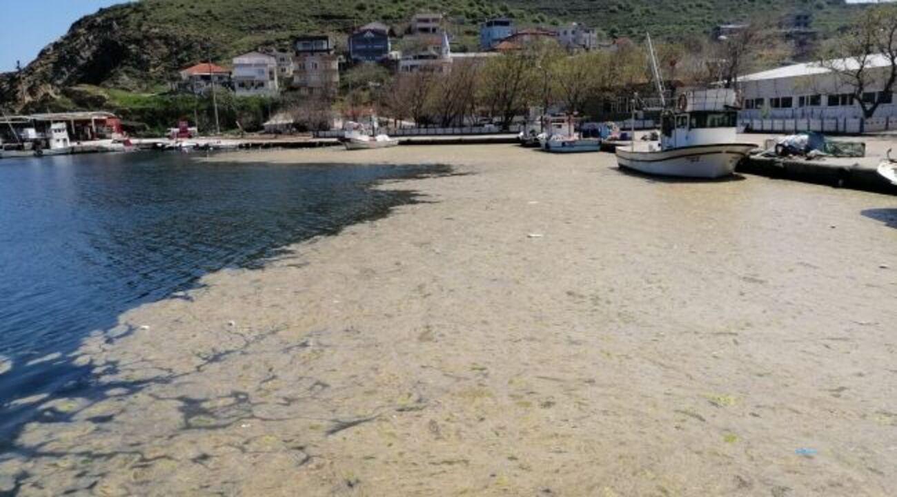 Marmara Denizi tehdit altında! Müsilaj balıkları öldürüyor