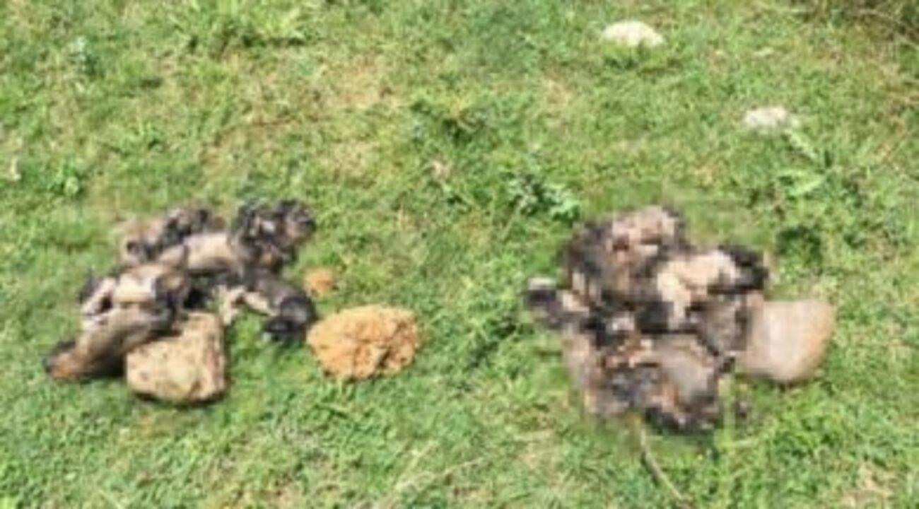 20 yavru köpek çuvallara konulup dereye bırakıldı