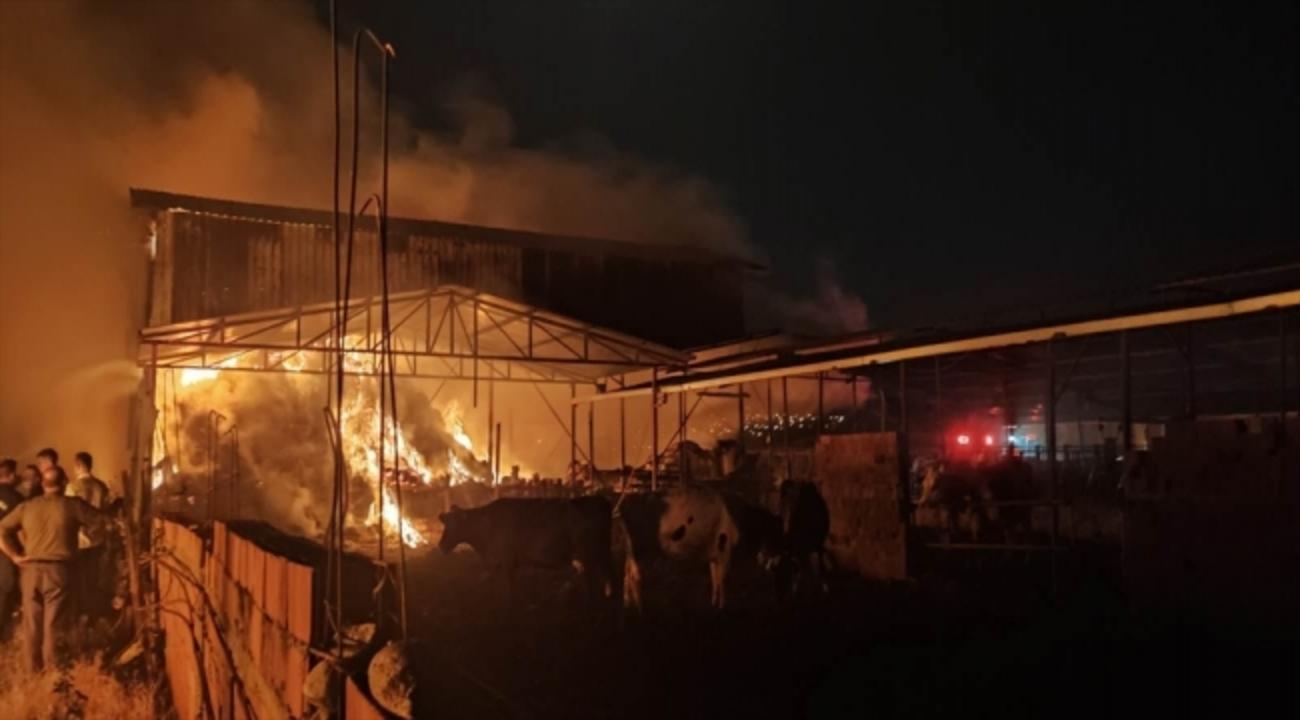 Manisa'da hayvan ağılında yangın!