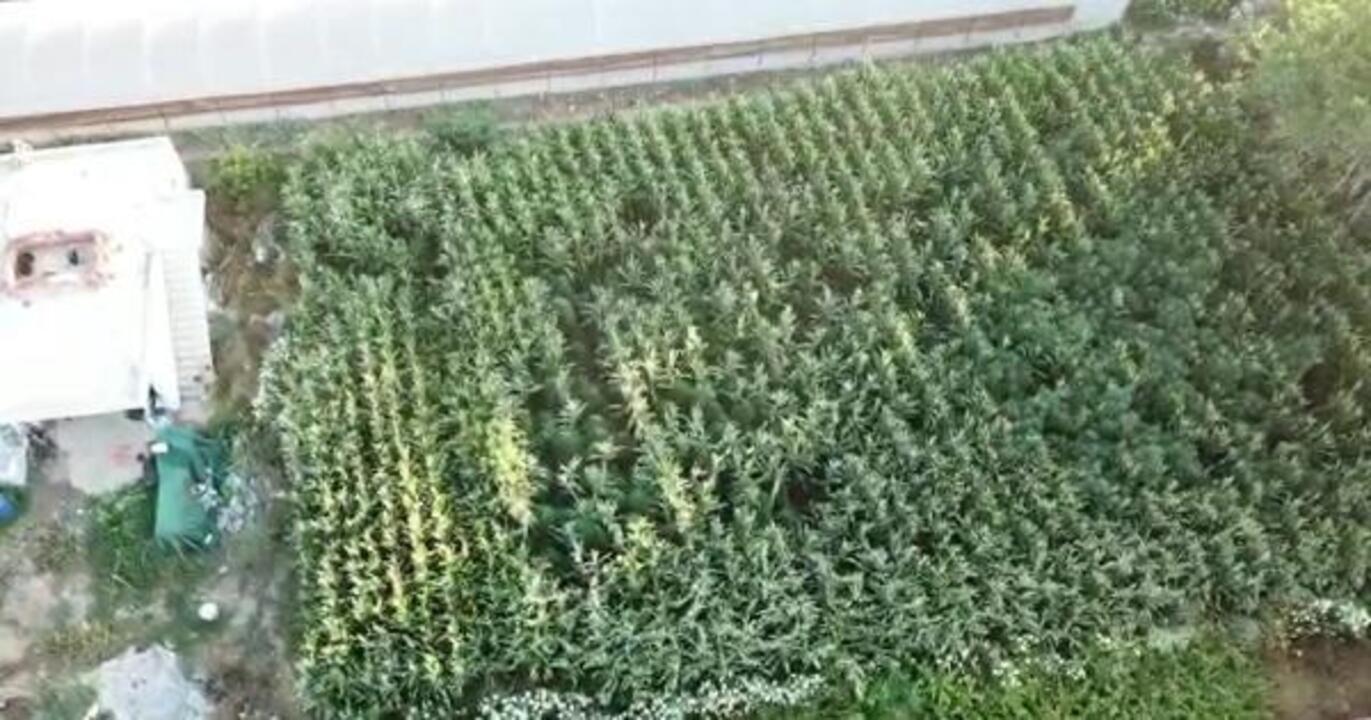 Alanya'da uyuşturucu operasyonu: 145 kök kenevir, 21 gram kubar esrar ele geçirildi