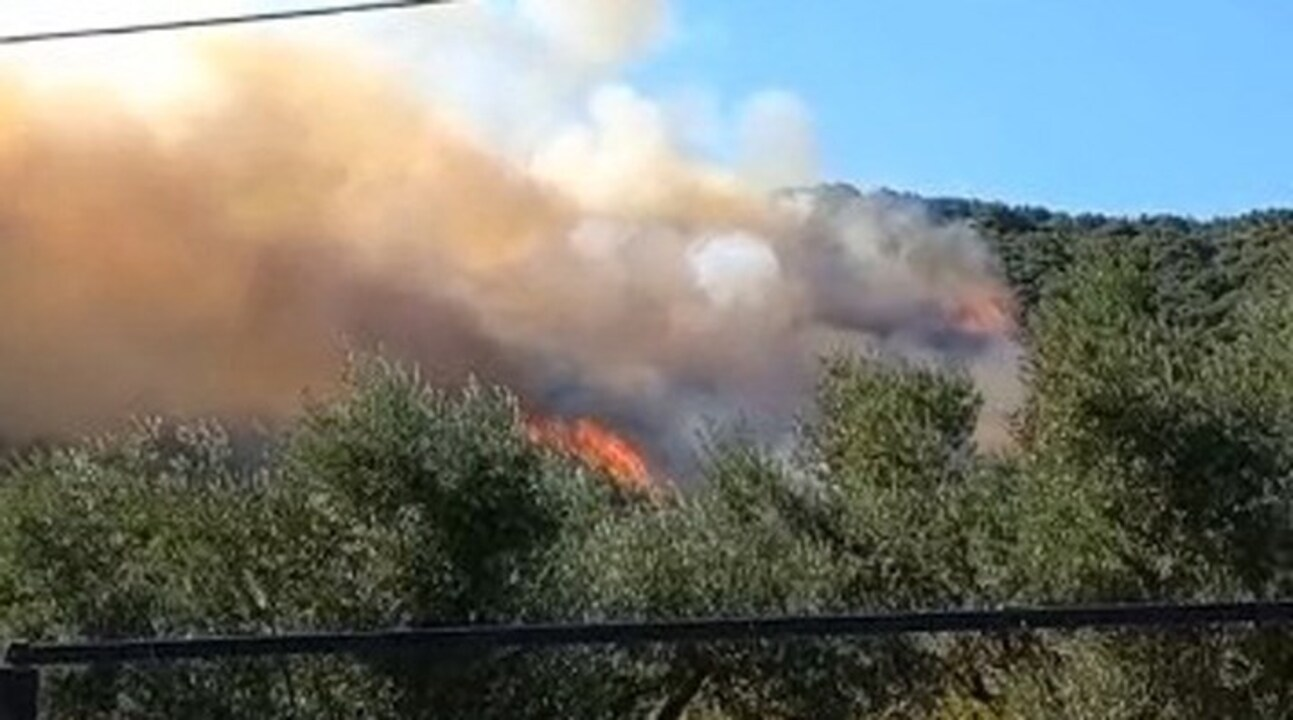 Bursa Mudanya'da orman yangını