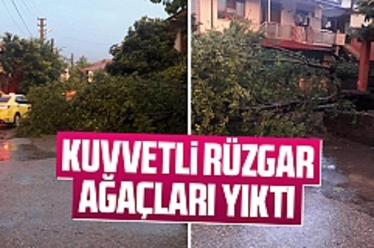 Sakarya Akyazı'da şiddetli rüzgar ağacı devirdi! Servis aracı son anda kurtuldu