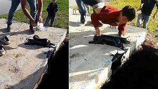 Atık petrol kurusuna düşen köpekleri çocuklar kurtardı!