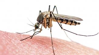 Sivrisinek ısırmasıyla koronavirüsü olunur mu?