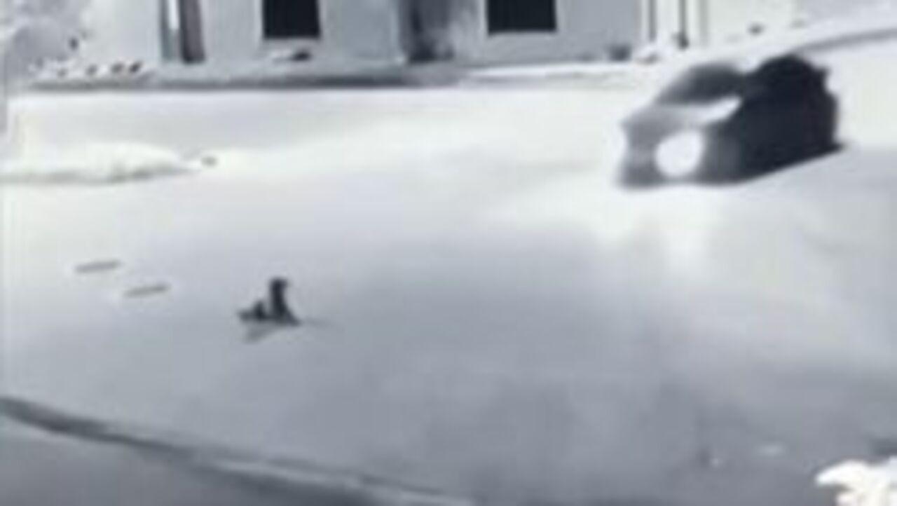 Bursa'da vicdansız sürücü yolda yatan köpeğin üzerinden geçti!