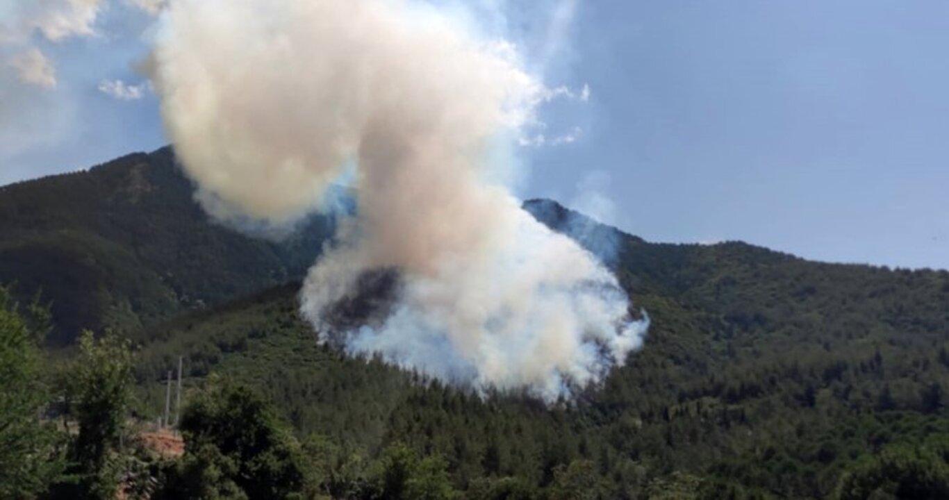 Denizli'de orman yangını