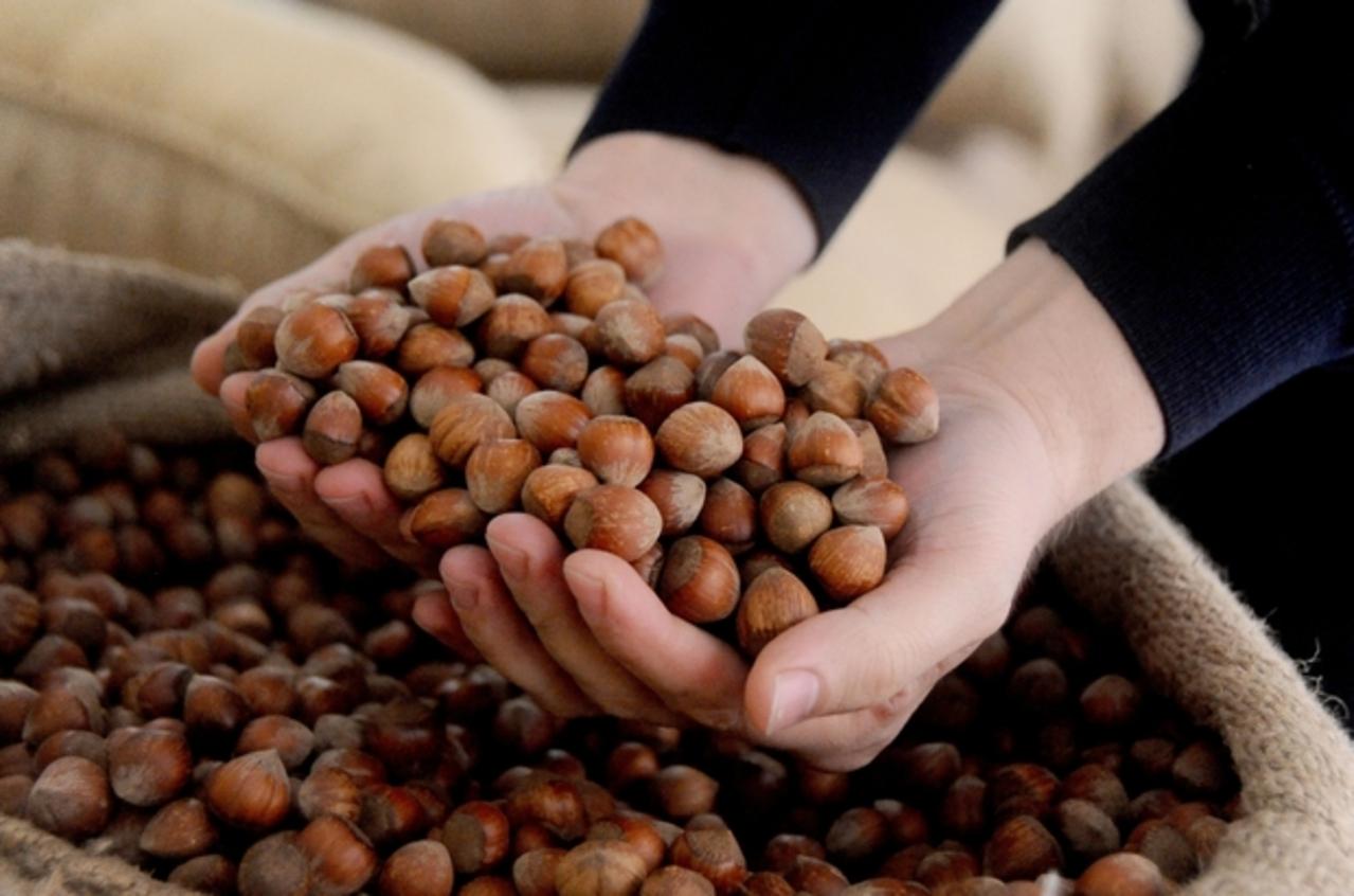 Mayıs ayında AB ülkelerine 299 ton 300 kilo fındık ihraç edildi