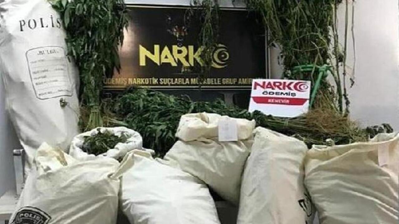 İzmir'de Narkotik operasyonu 363 kök Hint keneviri ele geçirildi