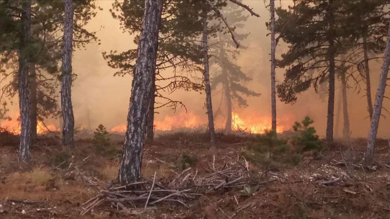 Nallıhan'daki yangın kontrol altına alındı