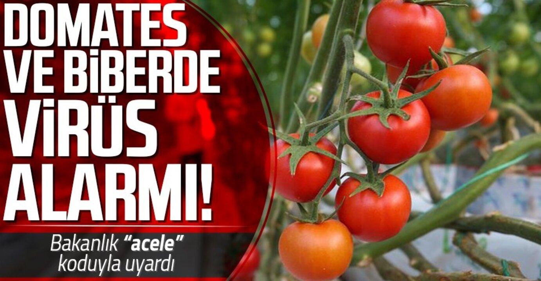 Türkiye'ye ithal edilen tohumlarda büyük risk taşıyan virüs tespit edildi!